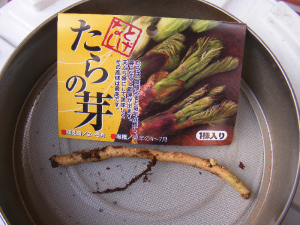 タラノキの苗