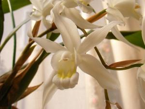 セロジネ・インターメディアの花